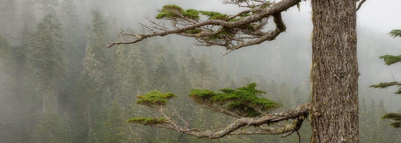 nature-serisi
